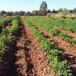 diverses-plantations